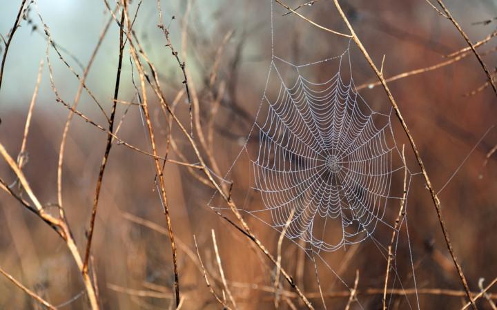 خانه عنکبوت...